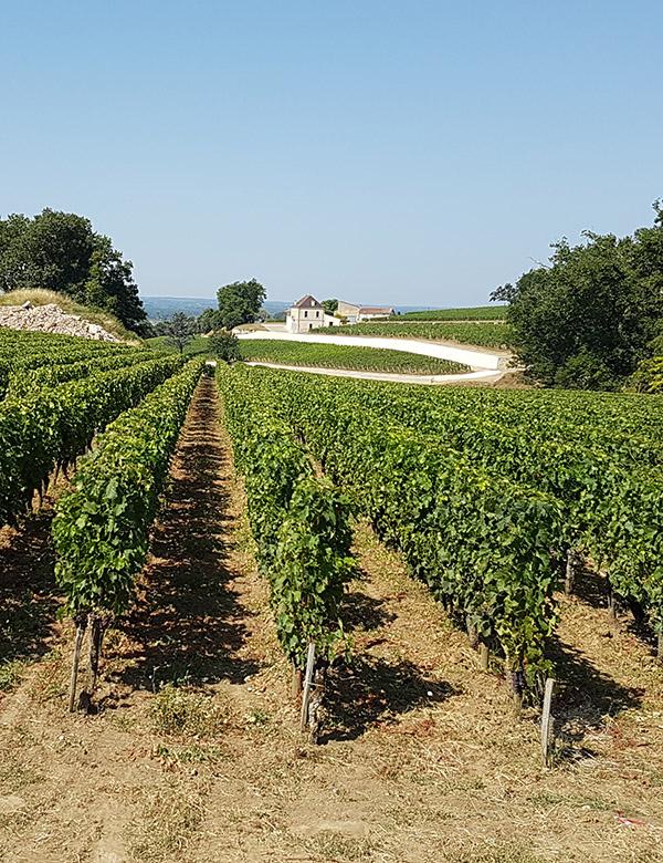 Las rutas del vino de España como motor de desarrollo turístico sostenible